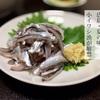 広島・夏の味 小イワシ漁が解禁