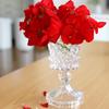 花のある暮らしは切花を買わなくても出来ます♪ガーデニングの始め方と、お勧めの花・ゼラニウム♪