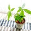 【家の中の癒し】観葉植物の魅力