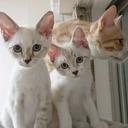 猫とおうちごと