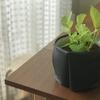100均材料で観葉植物の鉢カバーを手作り。簡単/5分/工作/100円