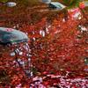 都内人気スポット【小石川後楽園】の紅葉は落ち葉もねらい目(文京区)