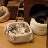 柏駅の猫カフェ『猫の手』でたくさんの猫たちと戯れてきた!