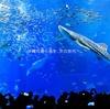 向山雄治の夏に行きたい!涼しさを感じれる水族館をご紹介!☆彡