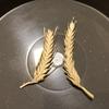 拾い物の小麦の種子を播いてみた