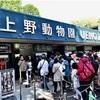 上野動物園 パンダ攻略法🐼