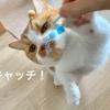自作コバエホイホイに誘引されるのは、コバエではなく愛猫でした。