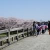 女川「梅の橋」
