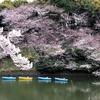 【行動記録メモ】2019年3月29日の訪問&鑑賞まとめ:桜の花見と今昔日本のエロ同人誌!