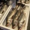 2020年2月6日 小浜漁港 お魚情報
