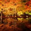 紅葉真っ盛り  ― 今夜の一枚 ―
