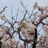 春の訪れとアンデッタについて