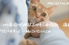 猫の平均寿命が伸びるかもしれない!後編