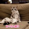 猫が前足をたたむ(香箱座り)をする理由は?