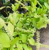 低木の植物