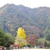 【11月11日(土)神楽共演大会 &11月12日(日)産業祭みさとふるさとまつり】