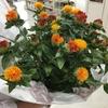天童市のお客さまから紅花を頂戴しました!