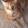猫と仲良くなるために、猫流の挨拶をしてみよう!!