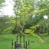 記念樹のまわり