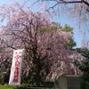 春が来た(3月記録)