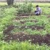 【オルかな農園報告㉚~雨で流れちゃうウネを再構築!きゅうりリベンジ~】