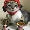 お正月コスプレ、かぶりもの猫の写真集2019 獅子舞猫