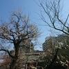 湯島天満宮の梅祭り、摂社戸隠神社と願掛け、本郷の桜木神社