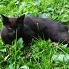 牧場猫「黒モフィー」の謎