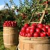 春夏秋冬で旬の果物を味わう!季節別、楽しみたいおすすめのフルーツを徹底解説