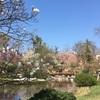 Setagaya Parkでお花見