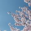【FUJIFILM】(また行ってきた)大岡川プロムナードの桜並木