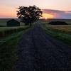 夏の美瑛町の風景~美馬牛の農道・麦畑の日の出~