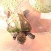 パブロフの亀