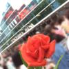 明日の夢を見た 〜Sexy Tour STAGE〜