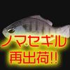 【DUO】最強ブルーギル系ワーム「ノマセギル」再出荷!