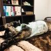 【第一弾】猫好きならたまらない、ちょこちゃんの面白写真集(笑)