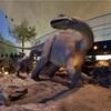 福井県🗾 恐竜博物館🦖