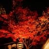 【素材】紅葉ライトアップ①
