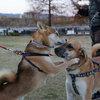 クリスマスイブの昆陽池犬部夕散歩