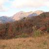 秋の気配 丹沢もと思って塔ノ岳へ 風強くてささっと