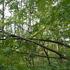 台風一過 倒木