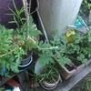 台風−農作物が心配
