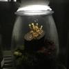 テラリウムの進化系「きのこリウム」を作ってみた。