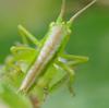 小さな虫たち(3)