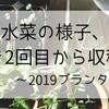 水菜の様子、間引き2回目から収穫まで~2019プランター栽培3~
