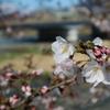 NT関西花見を開催しました