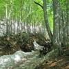 ◆5/21     新緑の鶴間池② …急坂を下って鶴間池へ