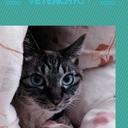 べとりちょ! 猫と暮らす 獣医学生