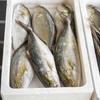 2020年9月12日 小浜漁港 お魚情報