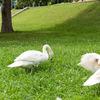 日本で唯一の「鳥の博物館」と手賀沼親水広場 千葉県我孫子市